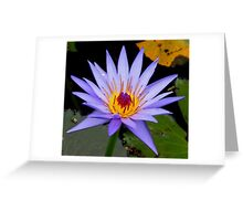 Lilac Waterlilly with yellow centre Greeting Card