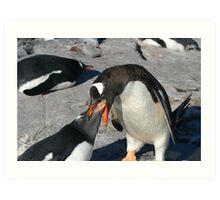 Krill for penguin breakfast Art Print