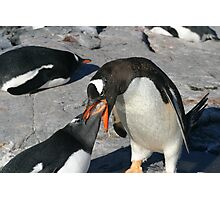Krill for penguin breakfast Photographic Print