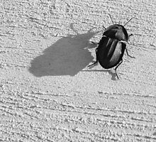 Beetle on Concrete by Pip Byrne