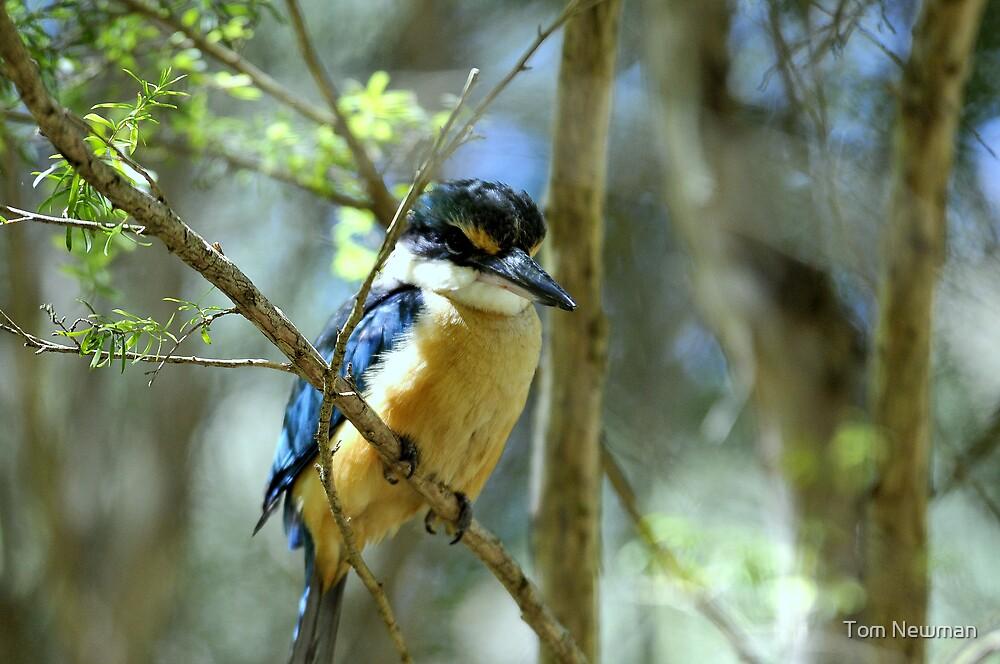 Kingfisher III by Tom Newman