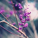 Purple berries (with texture) by liyafendi