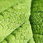 Green. by bluefern