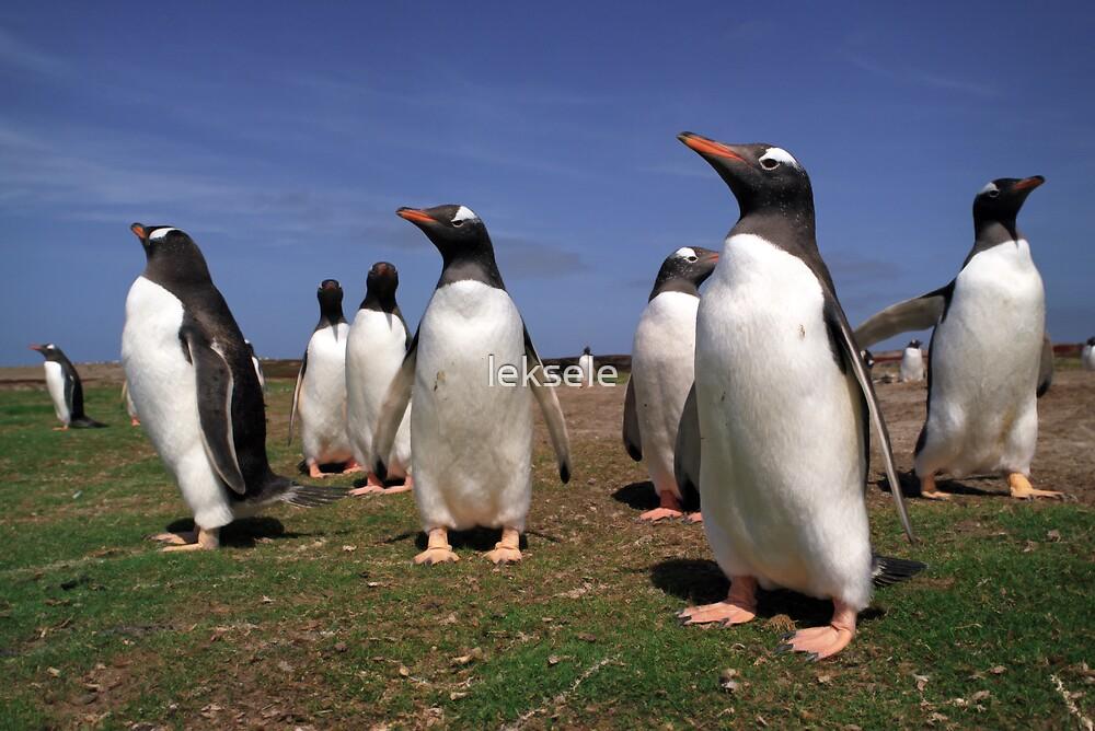 Gentoo penguins by leksele