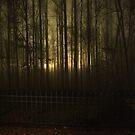 Glow 2 by Lolabud