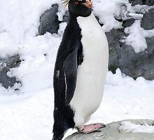 Rockhopper Penguin by Aneurysm