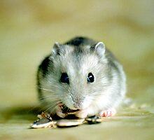 Cute Hamster by Aneurysm