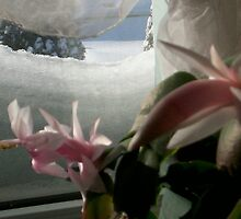 Christmas cactus contrast by ArtBee
