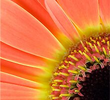 Orange by Lidija Lolic