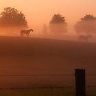 foggy horses by jhawa