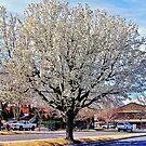 A Bishop Spring by marilyn diaz