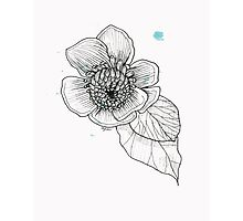 Single Flower Botanical Photographic Print