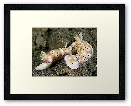Nudibranch Foreplay by Dan Sweeney