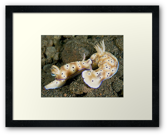 Nudibranch Foreplay by Dan Sweeney
