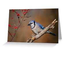 Blue Jay and berries.. Greeting Card