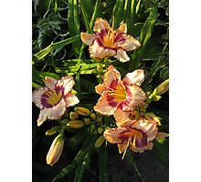 Oriental Peach Lily Flowers Photographic Print