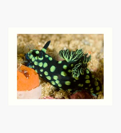 Green-Spotted Nudibranch Art Print