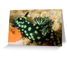 Green-Spotted Nudibranch Greeting Card