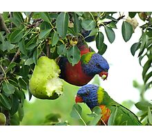 Pear feast Photographic Print