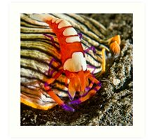 Emperor Shrimp on Nudibranch Art Print