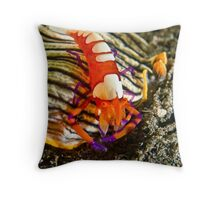Emperor Shrimp on Nudibranch Throw Pillow