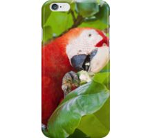 Scarlet Macaw iPhone Case/Skin