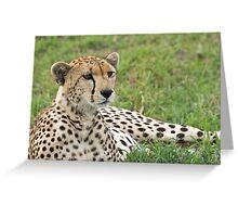 Cheetah Stare Greeting Card