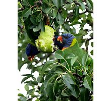 Three for the pear feast Photographic Print