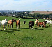 Rare Breeds Of Horses by aidan  moran