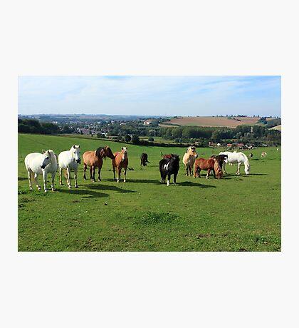 Rare Breeds Of Horses Photographic Print