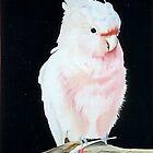 Pink cocketoo by secondskintru