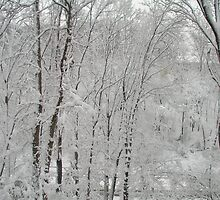 Winter Storm 2006 by hakathyo