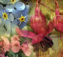 Floral Montage Series 8 by Amanda White