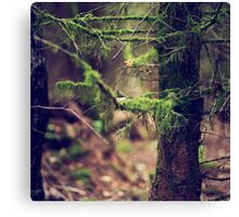 { where the moss grows } Canvas Print