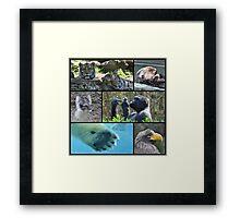 Wildlife Collage 1 Framed Print