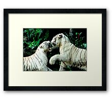 Fighting Tigers Framed Print