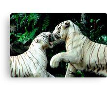 Fighting Tigers Canvas Print