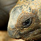 Closeup of a Giant Tortoise by Aneurysm