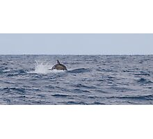 Dolphin leaping Photographic Print