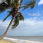 Palm Cove. by Jonathan Stables