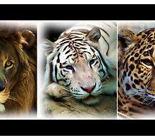 BIG CAT TRIPLE SHOT by Dennis Stewart