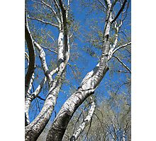 Crystal Blue Clear Sky Photographic Print