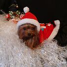Santa & Baby  by Gail Bridger