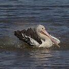 Pelican Bath by Kym Bradley