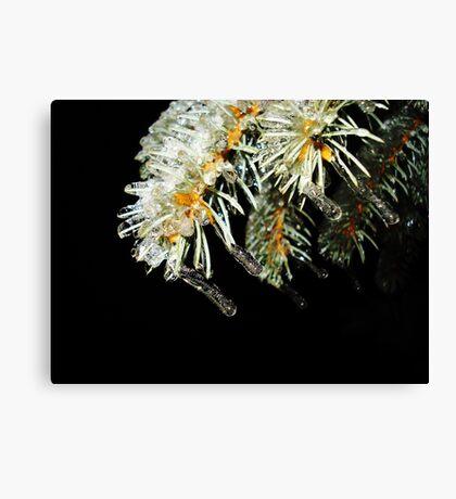 Frozen Pine Tree Canvas Print