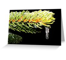 Pine Covered in Ice Greeting Card