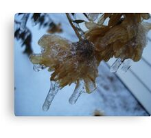 Ice Covered Flowers Canvas Print