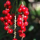 Berries in Fern Gully by Julie Sherlock