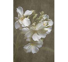 Oleander Cluster Photographic Print