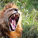 Yawn by Nickolay Stanev
